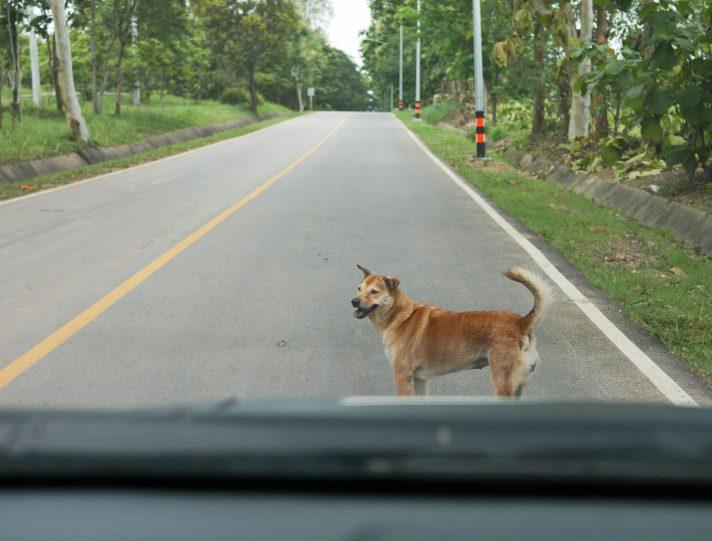 Incidente con cane senza guinzaglio